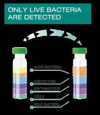 Alive bacteria box