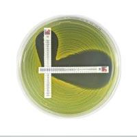 Метод MTS™ SAS Система исследования синергизма антибиотиков